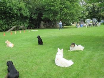 """Auf dem Übungsplatz mit vielen anderen Hunden bei der """"Arbeit"""""""