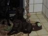 Heros und Henk am 20.01.14