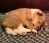 Ein Welpe, knapp 3 Wochen alt.