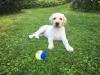 Sir-Luno von der Zauberschmiede, 11 Wochen alt.