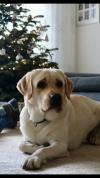 Spencer von der Zauberschmiede Weihnachten 2017