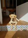 Sally von der Zauberschmiede, 5 Monate alt.