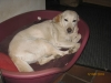 Oma Klara relaxt im Hundekorb. Sie ist noch immer topfit trotz ihres Alters.